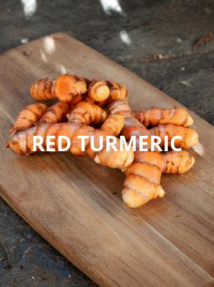 certified-organic-red-turmeric-bellinger-river-organics